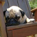 Step Away From the Dog House: Love, Guilt, and Imperfection